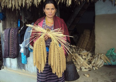 Photo 3. Ki Kumari Gurung holds up the long panicles of tinmase (aka seto or ande) kaguno. Photo: Shreeram Subedi/LI-BIRD.