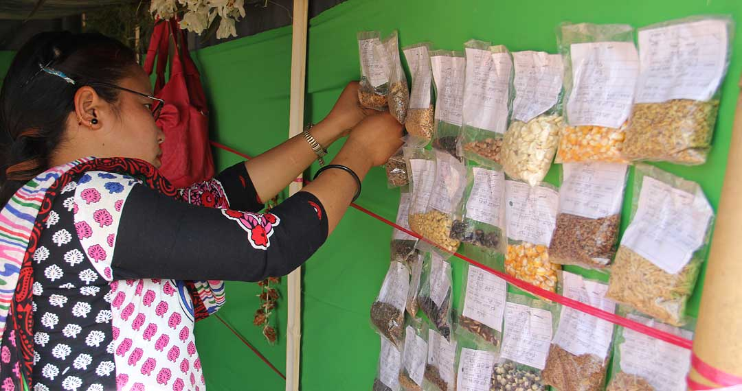 A woman participant preparing display of seeds' samples in her stall. Photo: Bibudh Dhewaju/LI-BIRD.