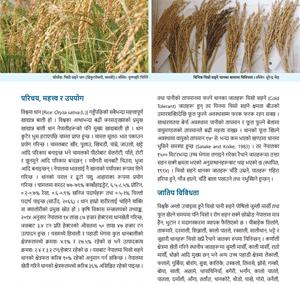 चिसो सहने धानको खेती र बीउ–उत्पादन प्रविधि (जानकारी पत्र)